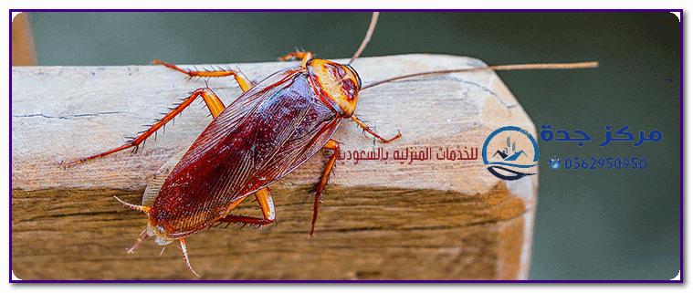 Photo of شركة مكافحة الصراصير بجدة