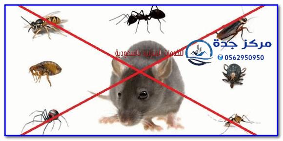 Photo of أفضل شركة مكافحة حشرات بجدة