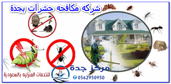 Photo of شركه مكافحه حشرات بجدة